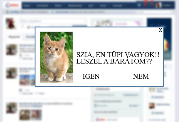 macskasalkalmazas