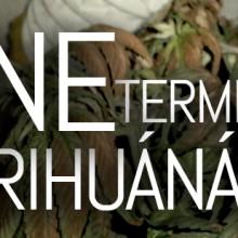 Hogyan NE termesszünk marihuánát? 2. rész