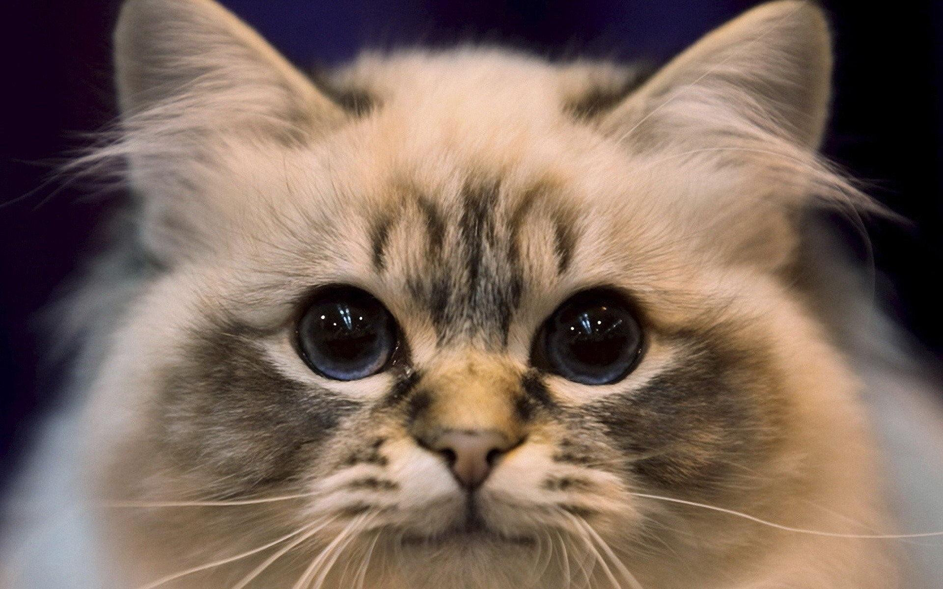 cute-cat-wallpaper-hd-picture-4886-wallpaper-hd-wallpaper-cute-animal-images-cute-cat-wallpapers