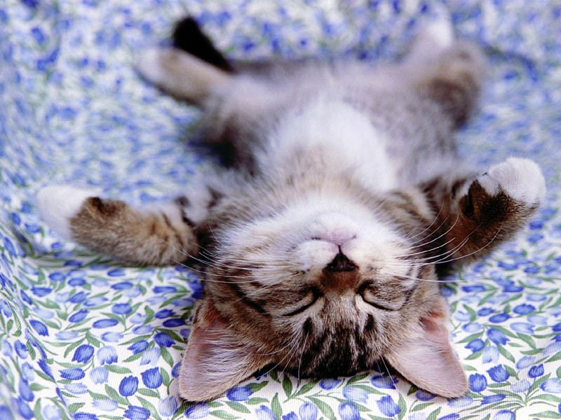 cute_catd-1vxkd4e